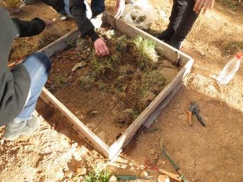 PHoto 12 Culture Lasagne-etape 2 dechets verts frais azotés19-03-18 College Rimbaud