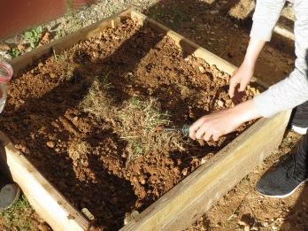 Photo 16 Griffe sur carré pour aeration et amendement organique