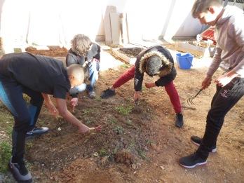 Aération d'une zone pour semis en pleine terre