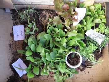 Prêt à planter les plants